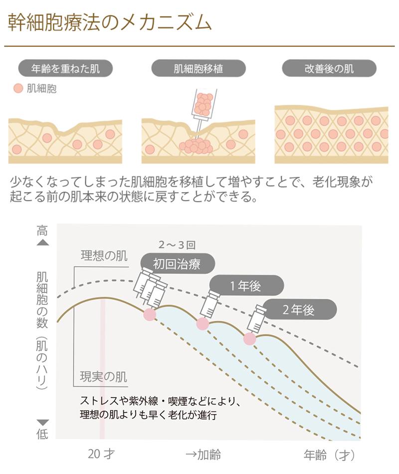 幹細胞治療のメカニズム