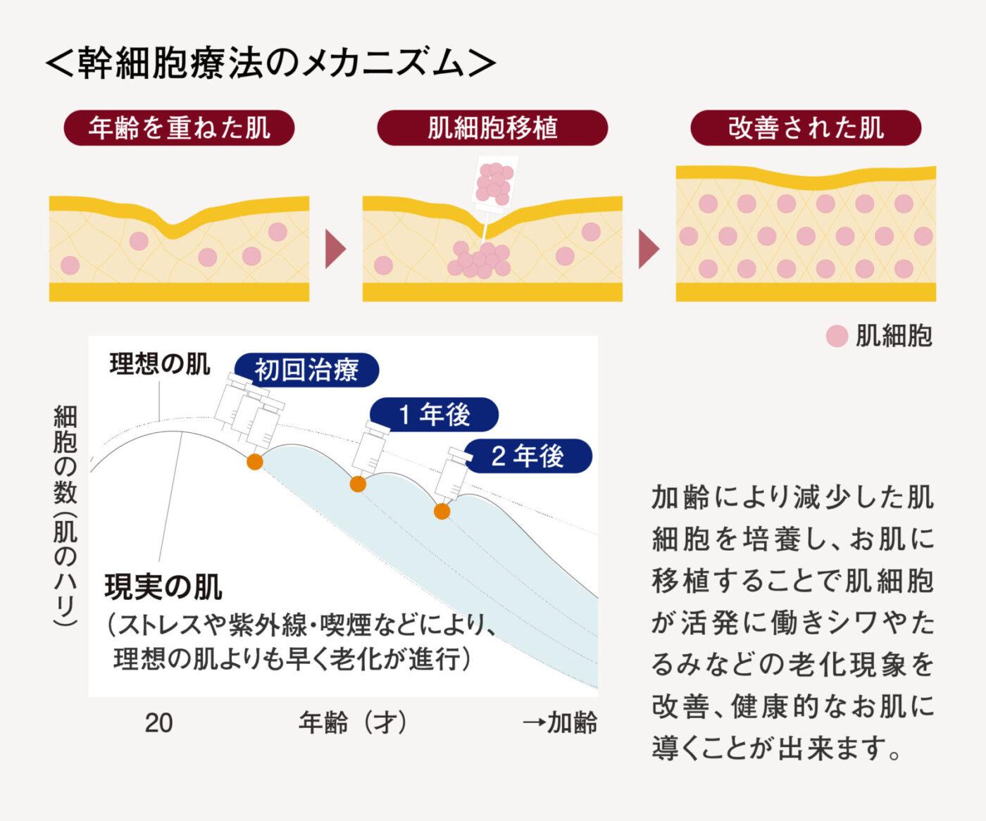 幹細胞メカニズム